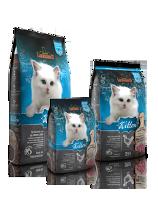 cibo-secco-per-gattini